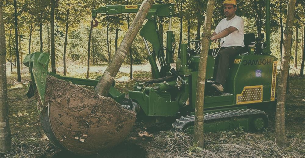 fa átültetés
